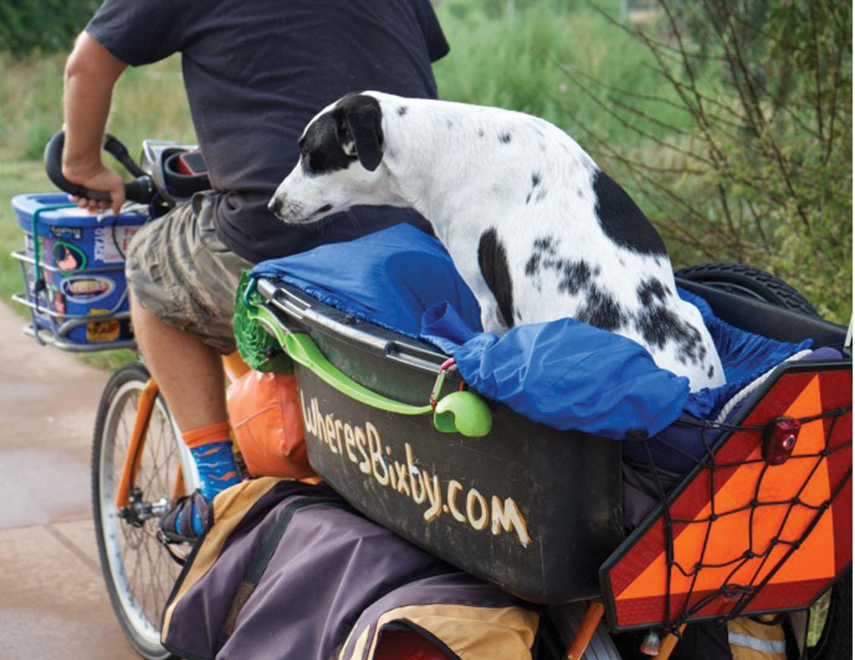 Carrying Dogs By Cargo Bike Yuba Cargo Bikes